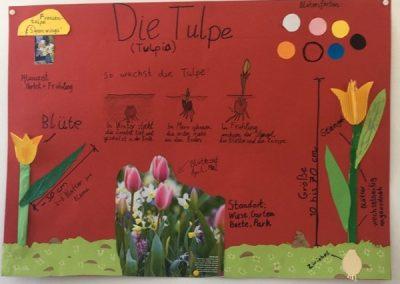 Lernplaktat Tulpe Ben